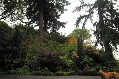 Rosiescape, hillside, trees and bushes, Llandover by the Sound, Seattle, Washington, USA by Wonderlane