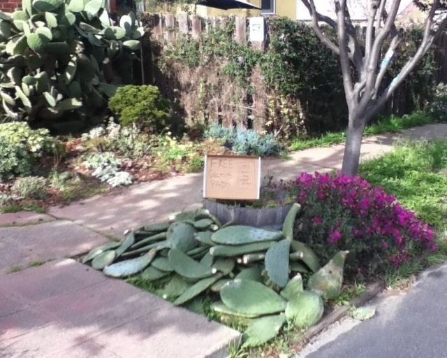 free cactus pads