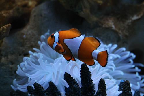Photo du mois: Comme un poisson dans l'eau