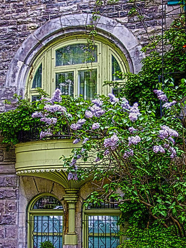 city trees flower window architecture photoshop montreal fujifilm hdr springtime 2014 kreativepeople brunolaliberté