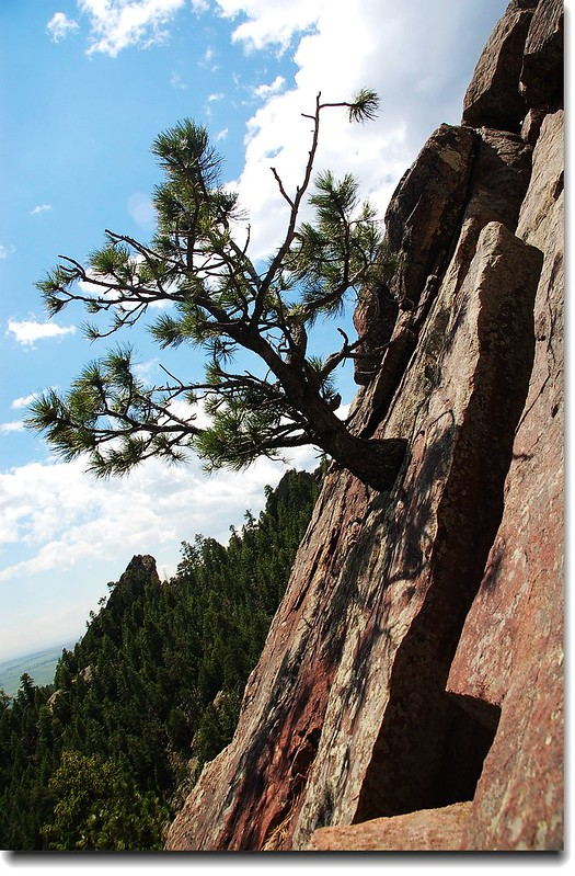 Tree on rock