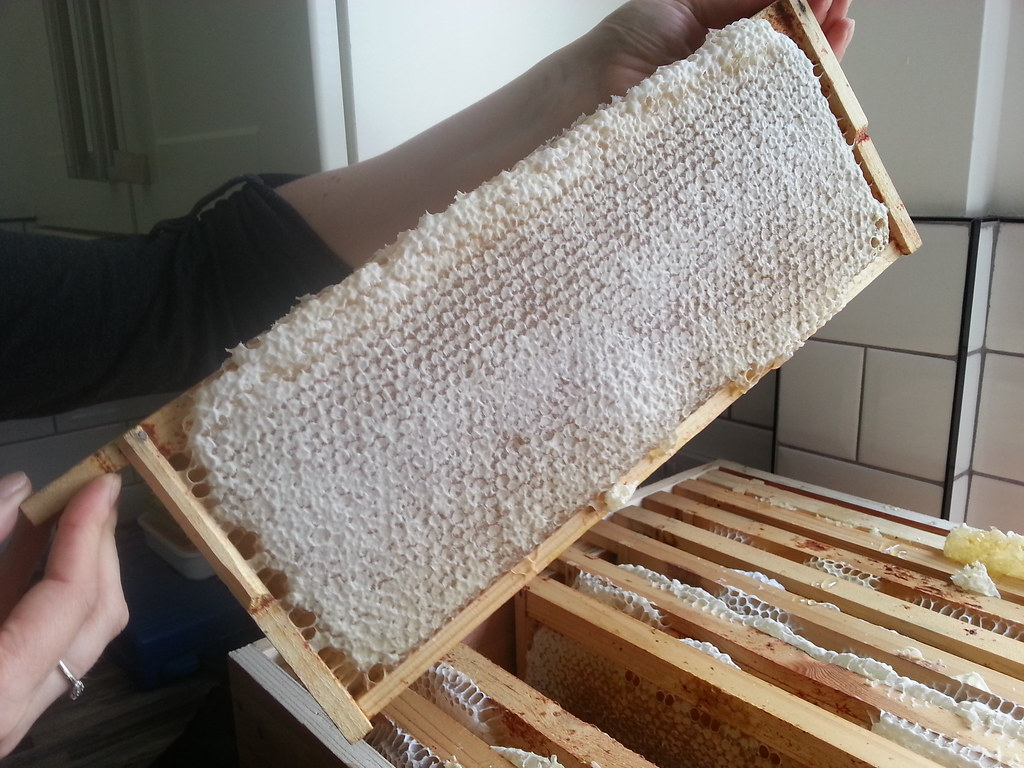 Spring honey extraction