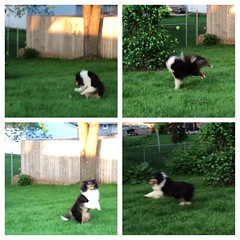 This morning's ball playing session with Jasper. #picstitch