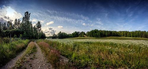 road flower field finland track country ansalahti