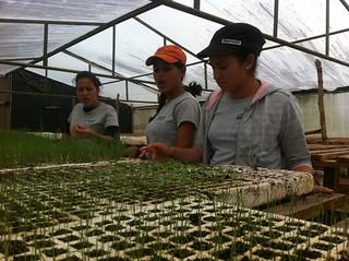 Honduras - Finca - Alumnas en el invernadero