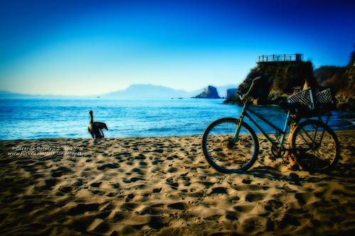 sea beach mar jalisco bluesky playa pelican melaque pelicano cieloazul