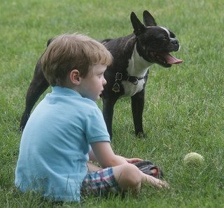 boston water front boy with boston terrier and ball