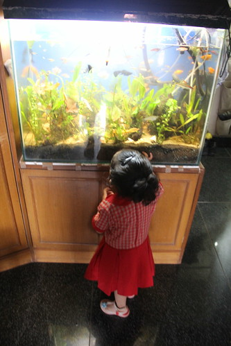 Nerjis Has Her Fishes In Marziyas Fish Tank ... by firoze shakir photographerno1