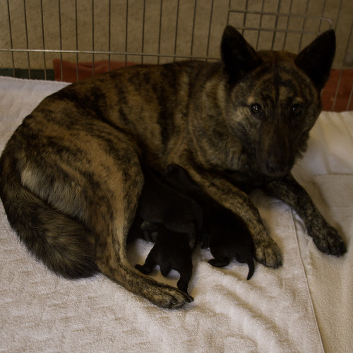 Ayu's Third Litter