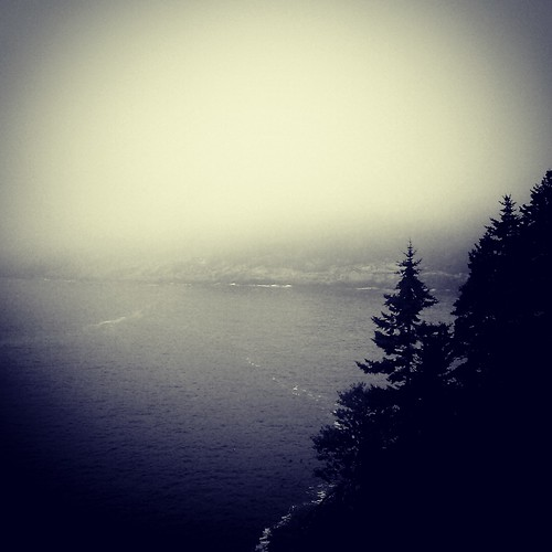 Fog • Acadia National Park