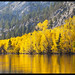 Golden Shore on Silver Lake by Corsey21