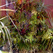 Flora Grubb Vertical Garden Bromeliads by epiphyte78