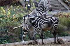 Zootour 2013_11_20