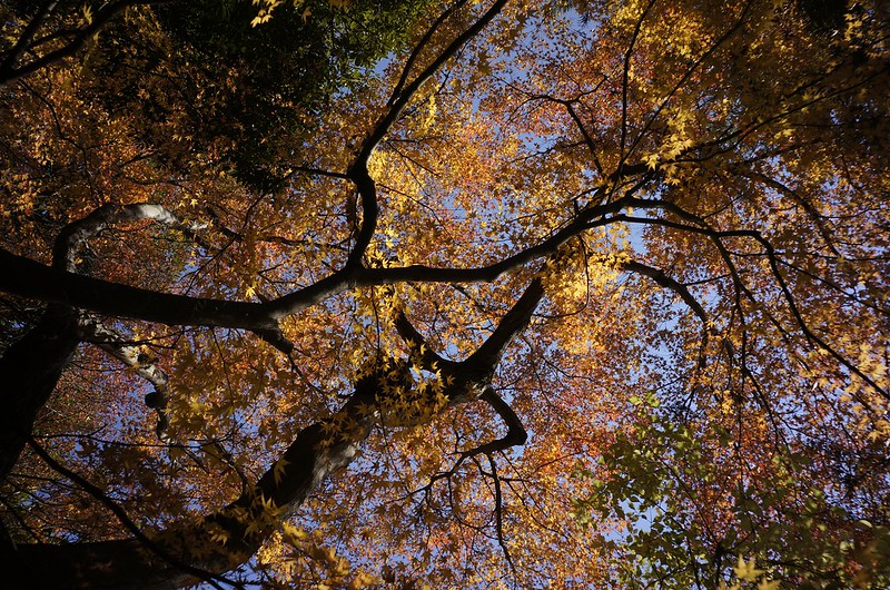 本多の森2013
