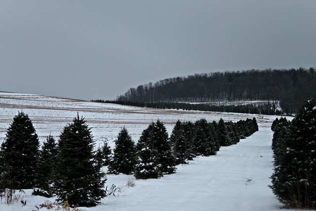 A snowy day at the Tree Farm!