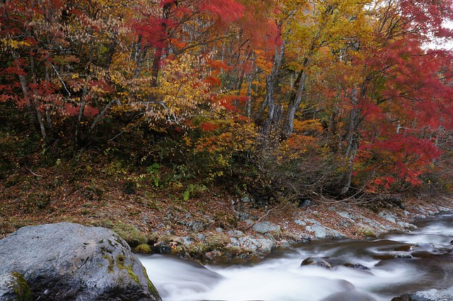 写真_秋の流れ2