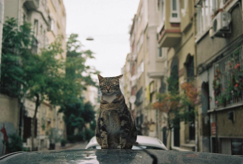 cihangir'de bir kedi