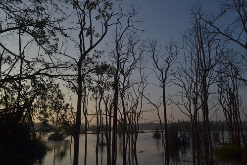 Shimoga Gajnurdam back water - sunrise