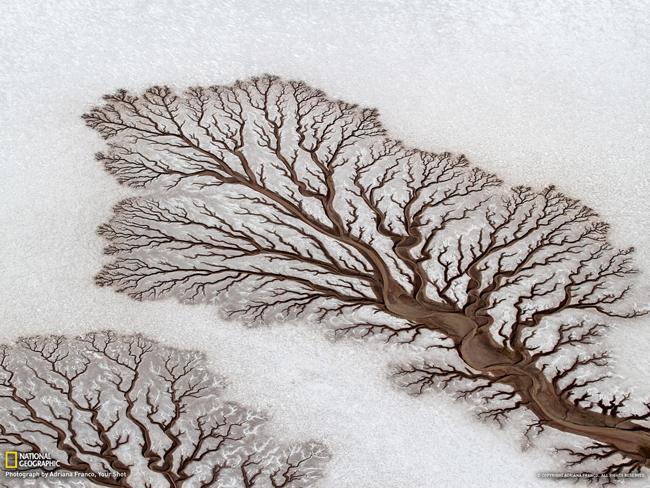 nature-patterns-009