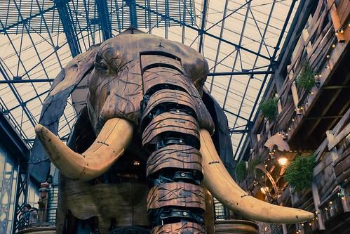 elephant france canon adobe tamron nantes lightroom boma paysdelaloire dfoto adobelightroom machinesdelîle eos5dmarkiii tamronsp2470mmf28divcusd machinesoftheisle
