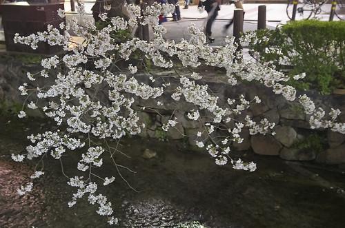 【写真】2014 桜 : 木屋町通/2021-09-17/IMGP5614