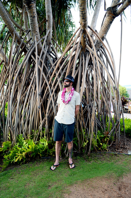 Luau Attire and Big Banyan Tree