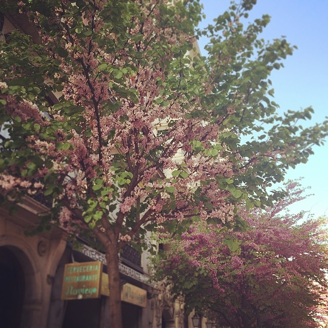 Springtime in Madrid