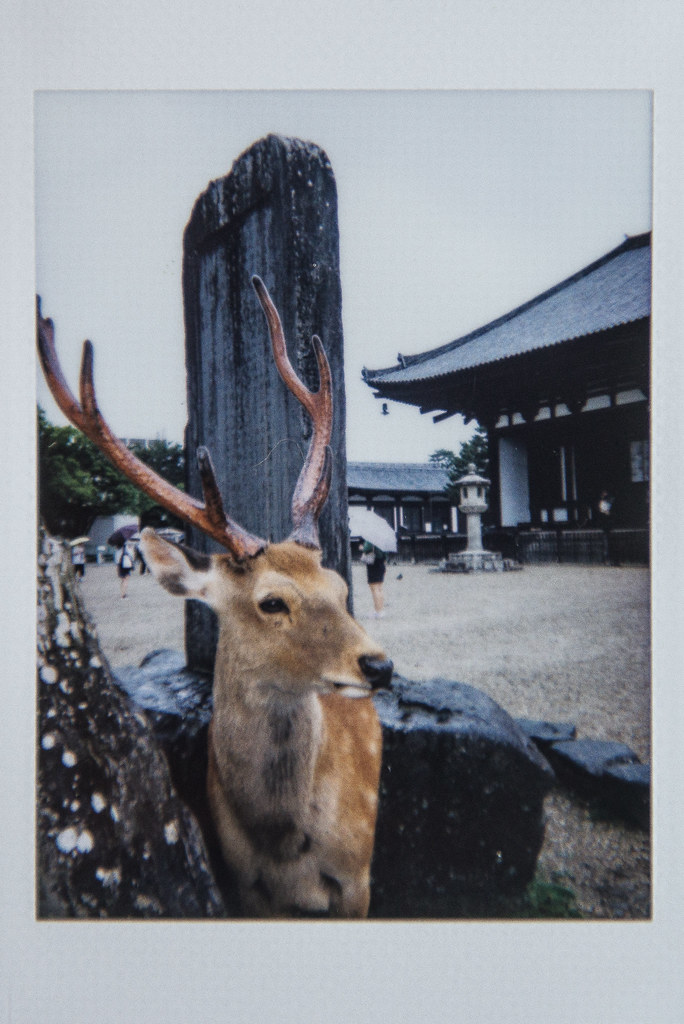 japan instax | nara park