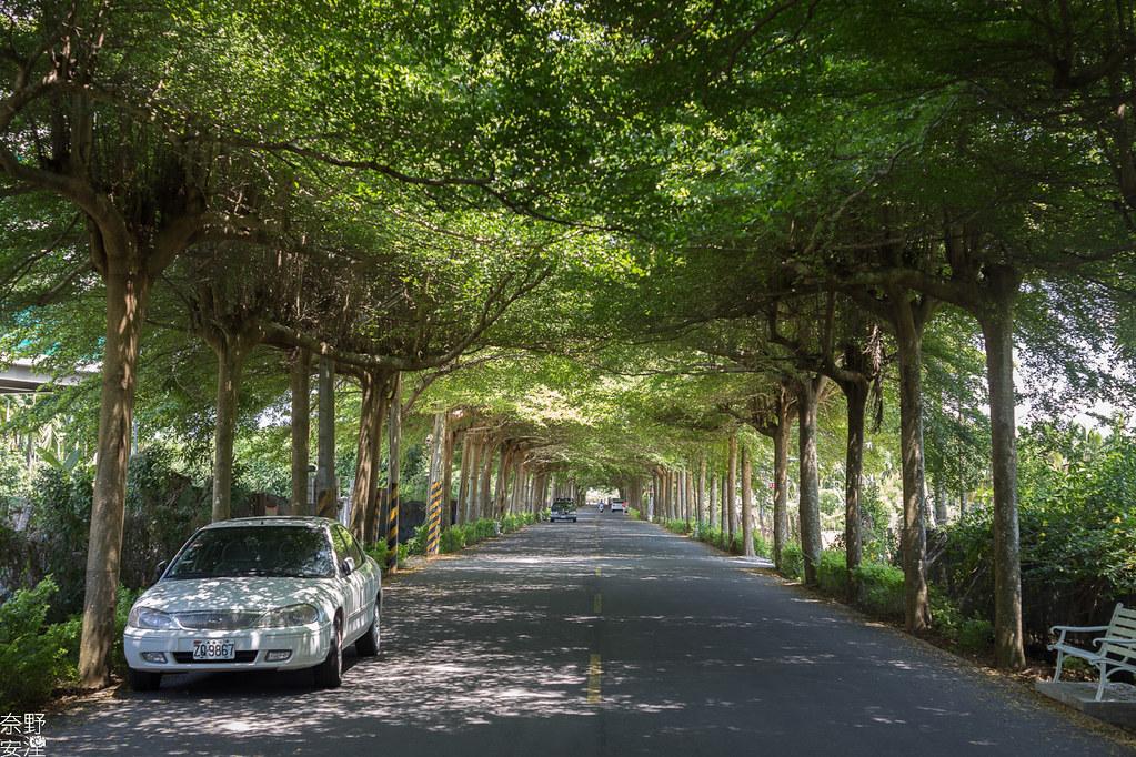潮洲泗林綠色隧道 (18)