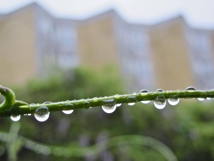 Sølund i regndråber