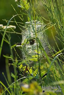 Spinne und ihre Falle