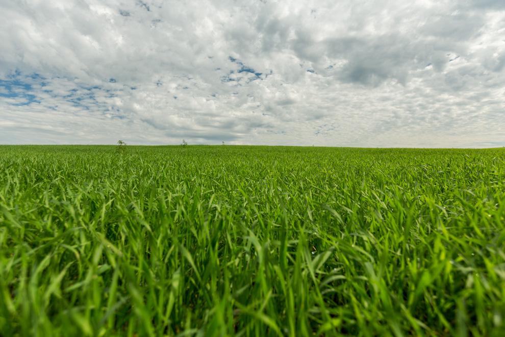 En los alrededores de Ita Verá existen extensiones de tierra que generalmente son utilizadas para diversos tipos de cultivos, especialmente maiz y soja. (Tetsu Espósito)
