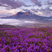 Mount St. Helens - Washington by Will Shieh