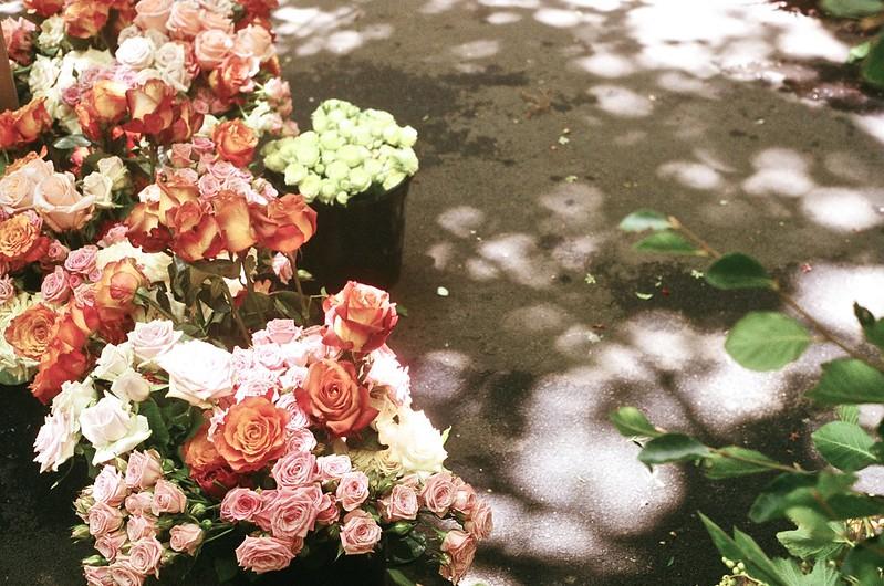 Flowers last Summer