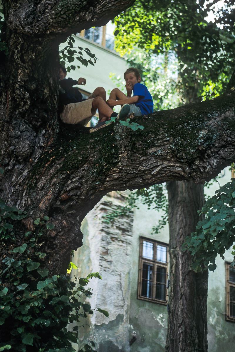 Rapaces en Sighișoara