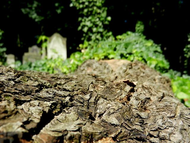 Jüdischer Friedhof Berlin_2013_25