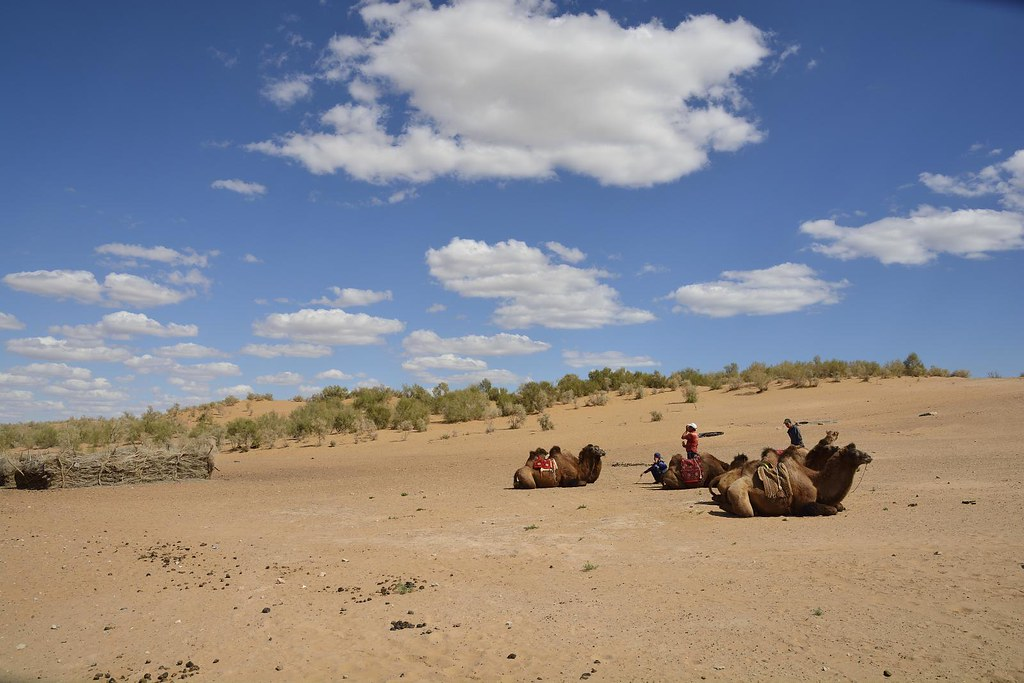 Kyzyl Kum Desert, Uzbekistan