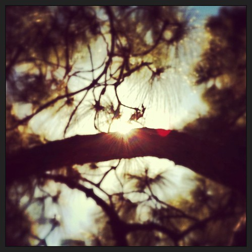 Afternoon under the pines. #findinghappy2013 Adjusted in #snapseed.