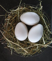 bird(0.0), nest(1.0), bird nest(1.0), egg(1.0), food(1.0), egg(1.0),