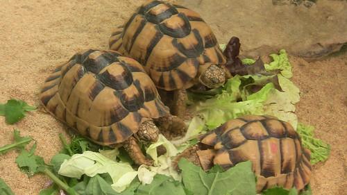 Turtles at the Wilhelma Zoo