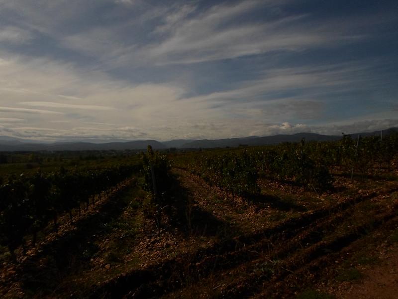 A Vineyard in Bierzo