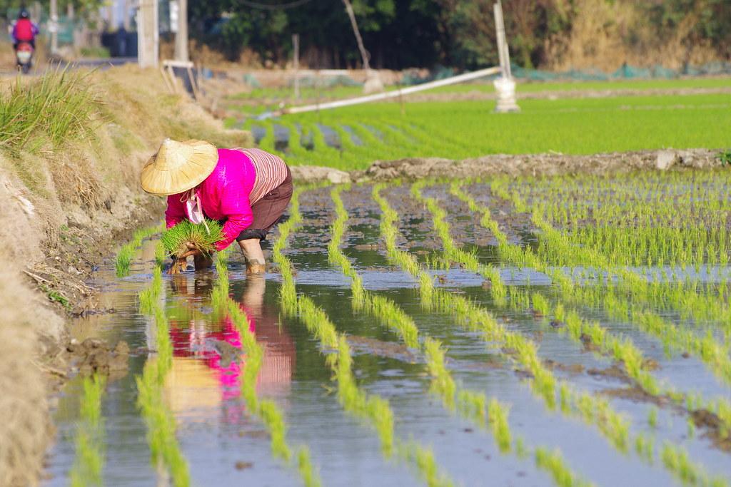 農夫與她的田