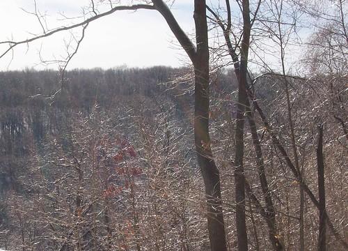 glittery trees 2