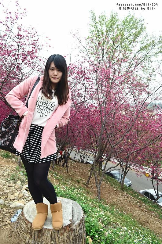 櫻 (31)