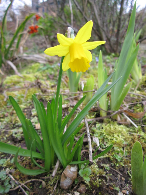 Springtime March 2014 (7)