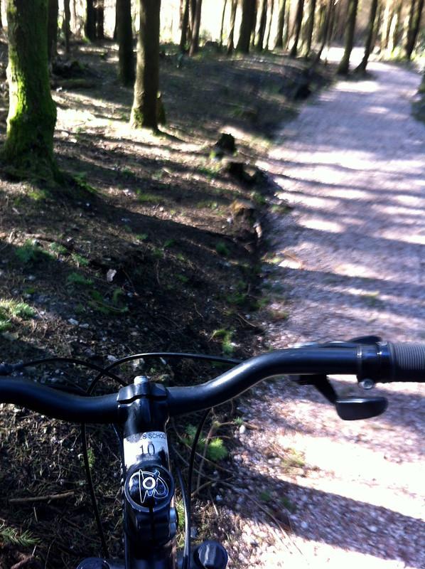Haldon Forest Bike Hire