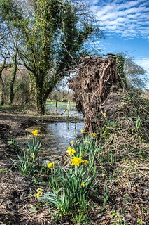 Spring arrives in England as flood waters slowly retreat.