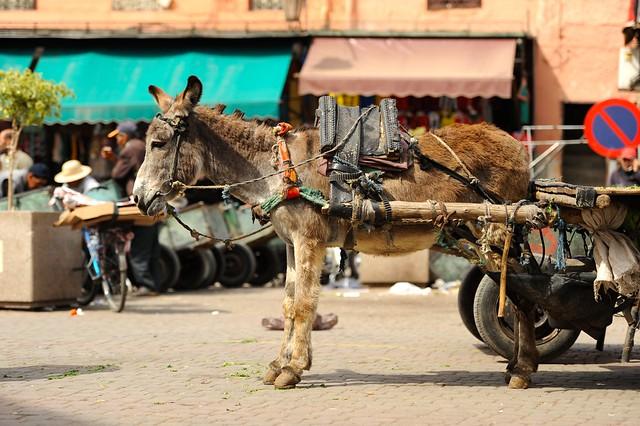 大学生の困ったを解決するウェブマガジン                 モロッコの歴史溢れる観光都市マラケシュのおすすめ観光スポット7選