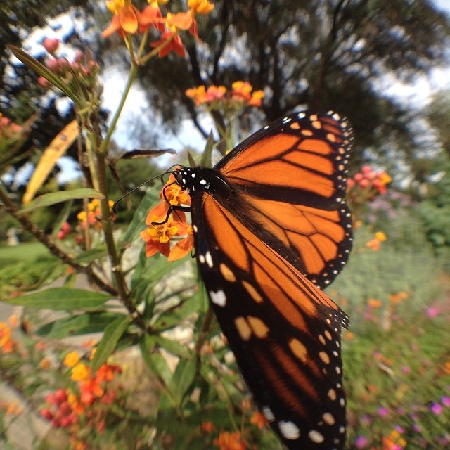 Butterfly @thehuntington  @olloclip #wideangle