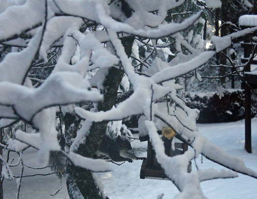 snowythief